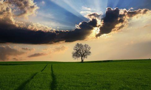 日差し、木