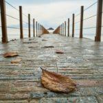枯れ葉、橋