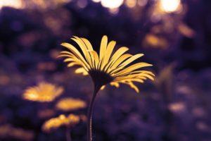 花、前向き