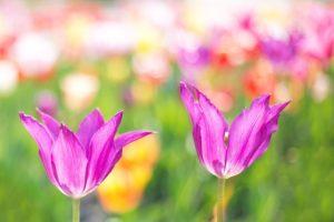 花、明るい